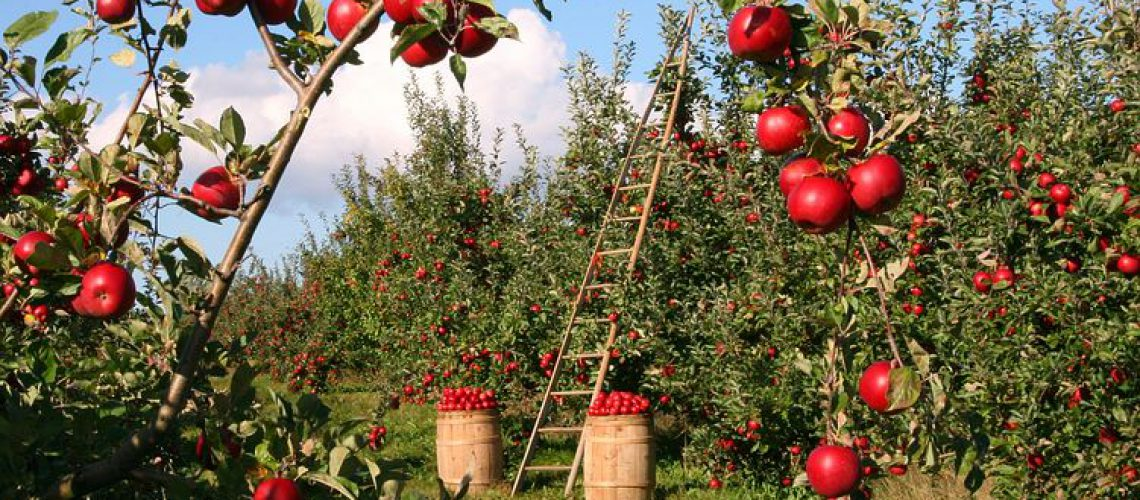 apple-1873078__480