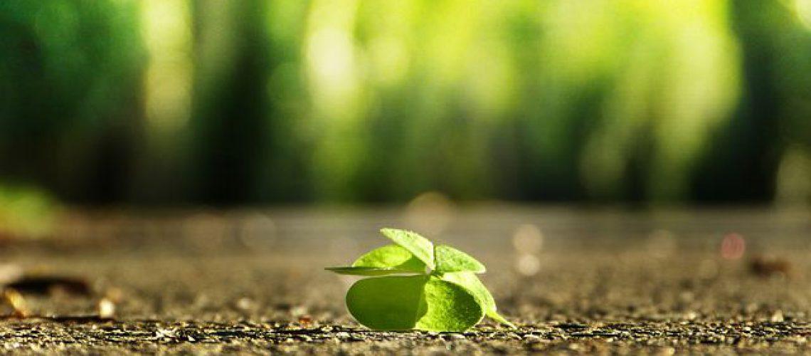 four-leaf-clover-3336774__480