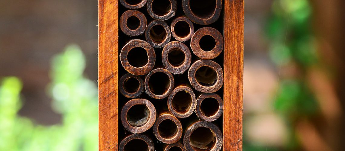 insect-house-403524_1280